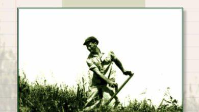 Photo of ספר מתכונים | צמחוניות